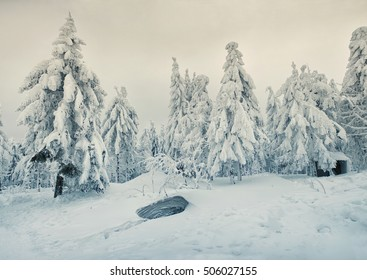 Fairytale snowy christmas trees in the mountains in winter