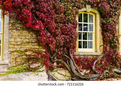 Fairytale-like autumn foliage around a window at an English manor.