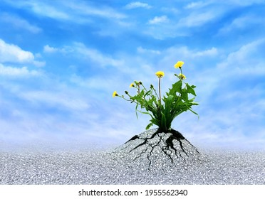 Faith, Hope and Love. Plants breaking trough asphalt with blue sky. Symbol for persistence, to never give up, miracles, optimism, a bright future and motivation. Be patient and life will persevere.