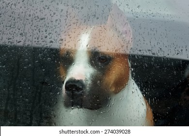 Faithful dog sitting in a car and looking through the glass