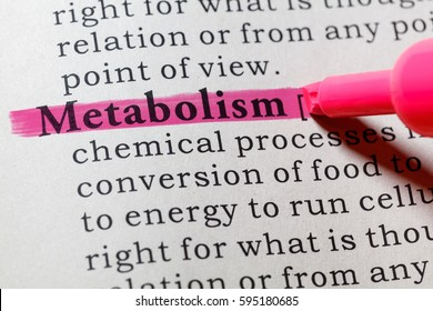 Fake Dictionary, Dictionary definition of the word metabolism. including key descriptive words.