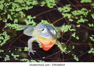 fake frog in the pond water background