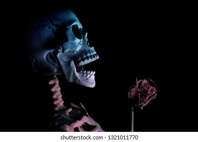 Fake human skull with dried rose on black background.