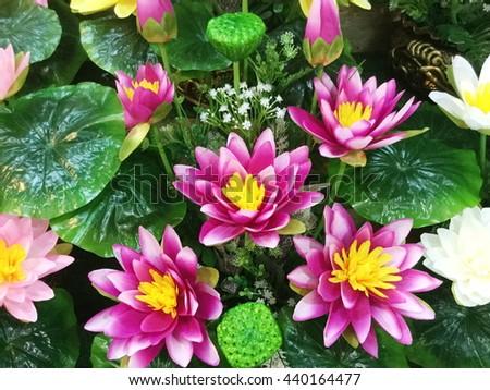 Fake Lotus Flower Background Stock Photo Edit Now 440164477