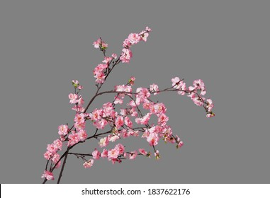Fake peach blossom branch  to decorate for celebrating Lunar New Year. It's also called Tet holidays in Vietnam, isolated on gray background - Shutterstock ID 1837622176
