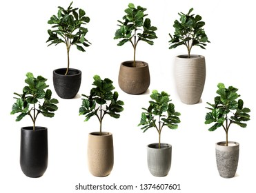 fake plant in the fiberglass pots in white background , fake trees in modern flowerpot