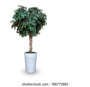 Fake tree in white ceramic pot on white background and clipping path.