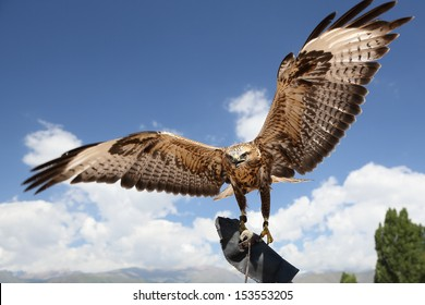 falcon has spread wings.  background sky.