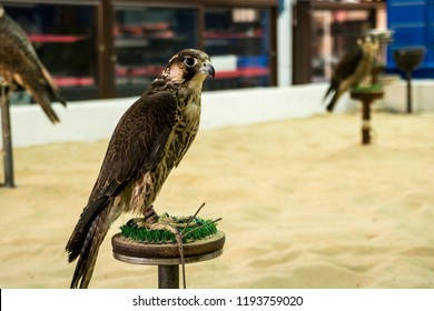 Falcon for sale in Souq Waqif, Doha, Qatar, Middle East