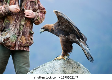 Falconer with a golden eagle