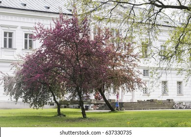 FALENTY, POLAND - MAY 5, 2017: Falenty Palace - Early Baroque Palace from the first half of the 17th century, located in Falenty in Poland. Spring at Falenty Palace, near to Warsaw