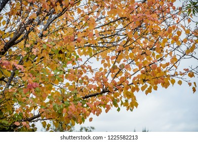 Fall in the air with colorful leaves.