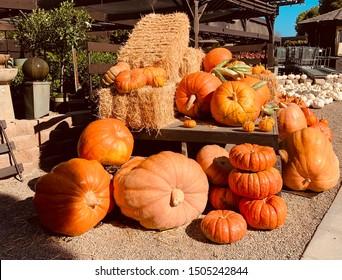 Fall Autumn Halloween Giant Pumpkins