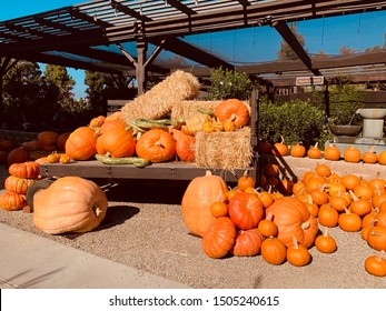Fall Autumn Halloween Pumpkins Hay