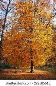 fall  autumn  leaves tree background