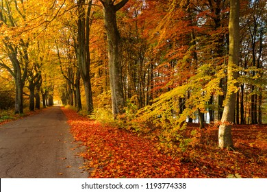 Fall autumn season landscape with forest and country road in north Poland.