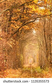 Fall autumn tunnel of love. Tunnel formed by trees and bushes along a old railway in Klevan Ukraine.