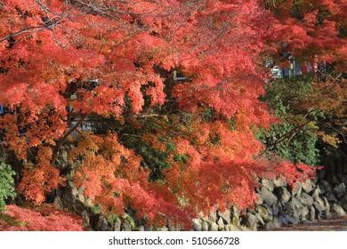 Fall. Autumn at Yasehieizanguchi japan