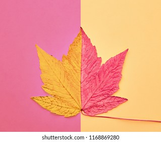 Fall Background. Minimal. Autumn Arrives. Pink Maple Leaf on Yellow. Fashion Design. Art Gallery Concept, Creative Sweet Style. Surrealism. Pop Art