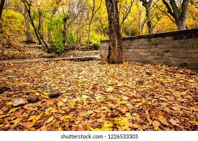 Fall in Baraghan near Tehran - Iran