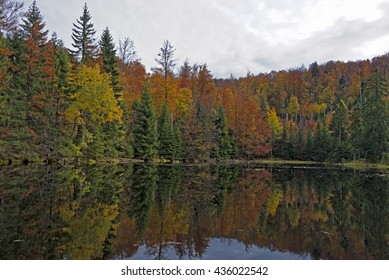 Fall in Bavarian Forest