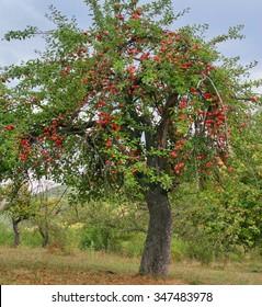 Fall in Bulgaria