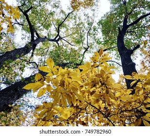 Fall Canopy Color