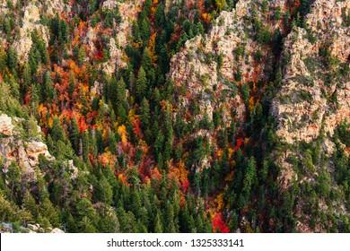 Fall color in a canyon along the Mogollon Rim near Payson, Arizona.
