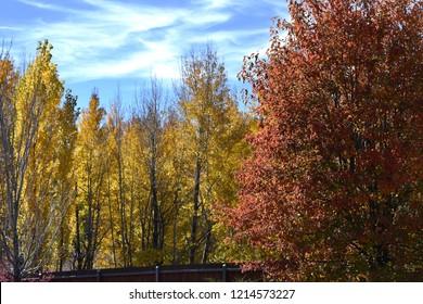 Fall color change in Flagstaff Arizona