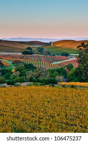 Fall color drapes the rolling hills of Napa and Sonoma Valleys in California.