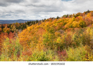 Fall Color on a hillside in Vermont