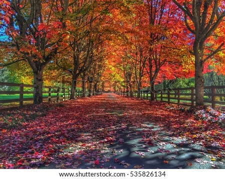 fall color trees lining driveway stock photo edit now 535826134