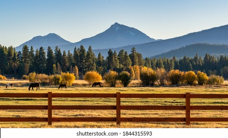 Fall Color Trees on a Ranch with Fence and Horses