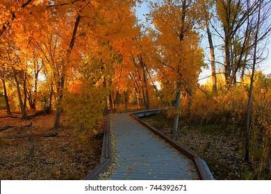 Fall Color Walkway
