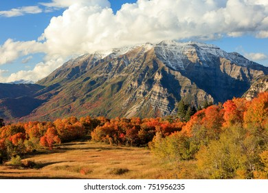 Fall color in the Wasatch Front, Utah, USA.