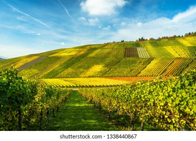 fall color wine in vineyard in the evening, germany, stuttgart, baden-württemberg