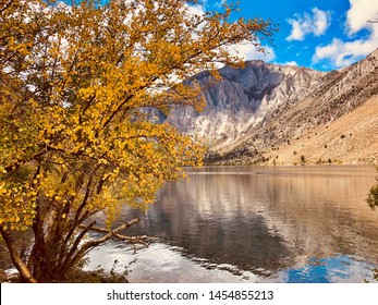 Fall colored branch at Convict Lake, California