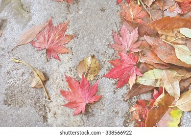 fall colored maple leaf  on rock, soft focus