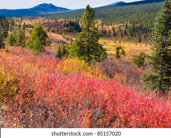 Fall colored valley among hills and mountains covered with boreal forest in Yukon Territory, Canada