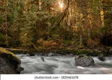 Fall Colors Along the Nooksack River in this Pacific Northwest Rain Forest. Silky smooth water, reds and yellows, dominate the landscape of this Washington state destination near Mt. Baker, Washington