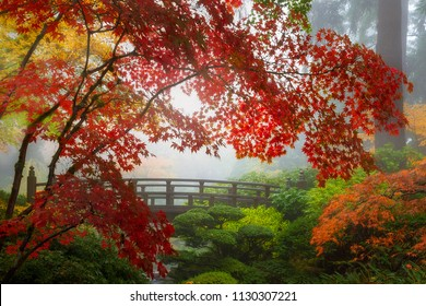 Fall colors by the Moon Bridge in Portland Japanese Garden one foggy morning
