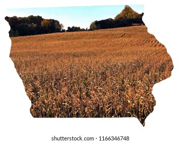 Fall colors with a corn field at the edge of a woods. State of Iowa