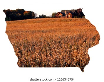 Fall colors corn field with a rustic cabin at the edge of a woods. State of Iowa