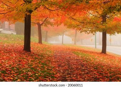 Fall colors, Deer Lake Vancouver, Canada