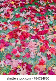 Fall Colors of Fallen Leaves in New England