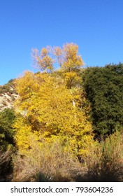 Fall colors in the forest, California