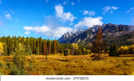 Fall Colors of the forest in the Rocky Mountains in Banff National Park in the Rocky Mountains in British Columbia, Canada