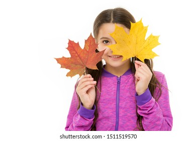 Fall colors are funny. They are so bright and intense and beautiful. Kid girl hold fallen maple leaves. Happy small child play with autumn leaves. Kid isolated on white show leaves. Skin care concept.