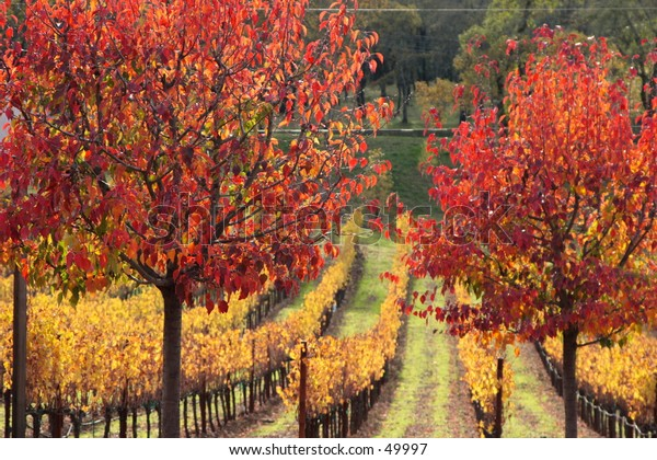 Fall colors in Grape Field