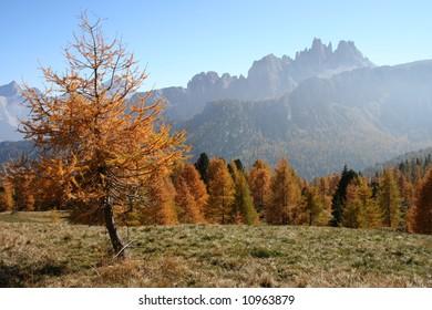 Fall colors in Italian Dolomites: view of the Croda da Lago